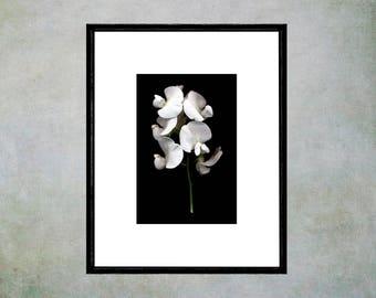 White Sweet Pea Flower Poster Art, Large Printable Fine Art, Modern Art Print, Minimalist Art, Black White Wall Decor, X-Ray Effect