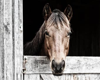 Horse Photography, Horse Art, Equestrian Decor