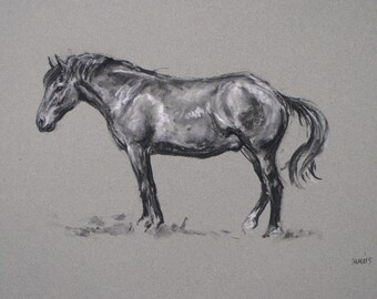 SALE Original energy and movement equine horse charcoal and chalk movement art drawing 'Resting' by H Irvine