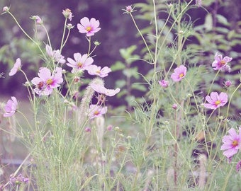 Fine Art Photography, Landscape, Pretty In Pink Flowers In A Field Print, Field Photography, Pink Wild Flowers Photography,