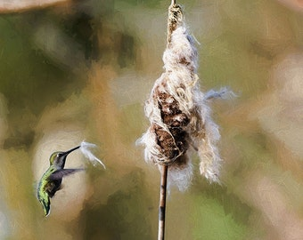 Hummingbird Image, Nature Photo, Nesting Hummingbird, Annas Hummingbird,