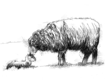 Sheep and lamb sketch | Limited edition fine art print from original drawing. Free shipping.