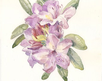 Rhododendron flowers watercolor drawing ORIGINAL mauve flowers painting. Botanical floral art by Catalina