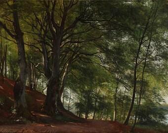 Carl Frederic Aagaard: Forest Scene from Sorø, Denmark. Fine Art Print/Poster. (003161)