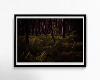 Fine Art Poster Print: Forest Secrets ----- wall art - photography - woods - forest - dark - dark forest - deep forest - magical - fern