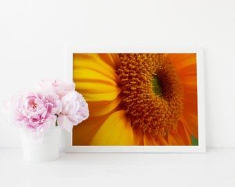 Sunflower Fine Art Photo Print