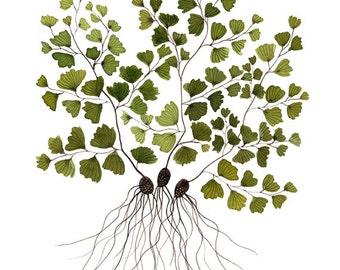 Frauenhaar Farn botanischen drucken, pflanzlichen, Wald Farn Kunst, Giclée Druck, Blumenkunst, Aquarell Druck