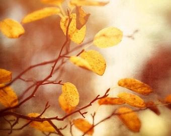 Nature photography, Autumn trees, Leaves, Fall, Orange, Wall Art, Home Decor.