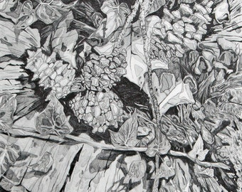Outdoors Tree Trunk Leaves Landscape Original Graphite Drawing Print