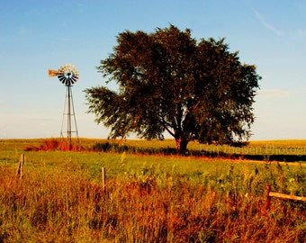 Nebraska Tree and Windmill in Fall.   Fine Art Photography, home decor, wall decor.