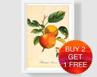 Apple Art Print, Apple Kitchen Decor, Botanical Print, Antique Art Print, Apple Illustration, Apple Wall Art, Apple Poster, Apple Home Decor