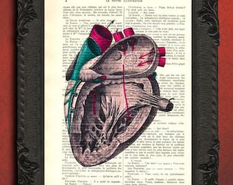 anatomical heart print anatomical heart study illustration vintage in color