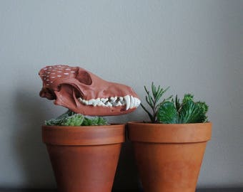meditation 09 // A Play On Clay // Painted Coyote Skull // Contemporary Taxidermy Coyote Skull OOAK