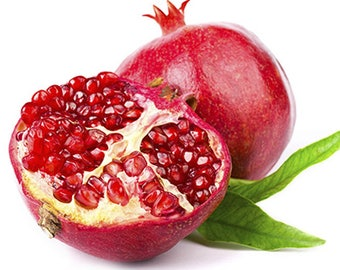 Pomegranate Extract - Natural Dye - 1, 2 or 4 oz Sizes