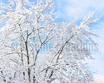 Snow Photograph, Snowy Tree, Blue Skies, Winter Photography, 8x10, 5x7