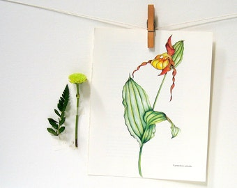 Flower Print - Lady's Slipper Orchid - 1989 Vintage Page 10 x 8