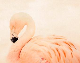 photographie de flamant rose, chambre rose, photographie animalière, nature, carré minimaliste, décor à la maison rose, photographie d'oiseaux