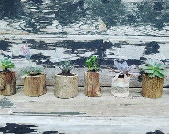 Mini Succulent planter // air plant // gifts for her // gifts for him // cactus // rustic // live succulent gift // gifts for mom // plant