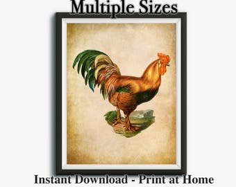 Rooster Decor, Farmhouse Printable, Vintage Rooster Prints, Rooster Kitchen Decor, Farm Print, Multiple Sizes, Instant Download, 16x20