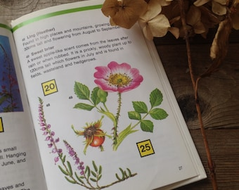 Guide to Wildflowers - Watercolour Artist - Vintage Book -  Gift for artist - Creative gift - Softcover Book - Illustrated Book