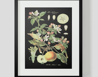 Botanical Apple Print Plate 421 Black Background