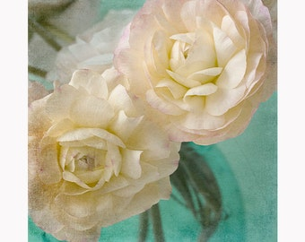 Ranunculus Art Print, Pink, White Flower Photograph, Floral Decor, Ranunculus Wall Art