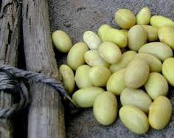 "Yellow Canary Bean seeds ""Mayocoba"" Heirloom Bean seeds"