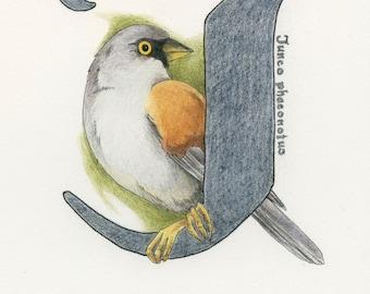 Avian Alphabet J