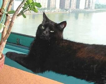 Black Cat Art, Giclee Art Print, Home Decor, Cat Lover Gift, Wall Art, Cat Gifts, Housewarming Gift, Deborah Julian