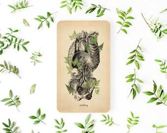 Oracle of Oddities, 3rd Edition, Oracle Deck, Oracle Cards, Anatomy Tarot Deck, Tarot Deck, Tarot Cards, Anatomy Oracle