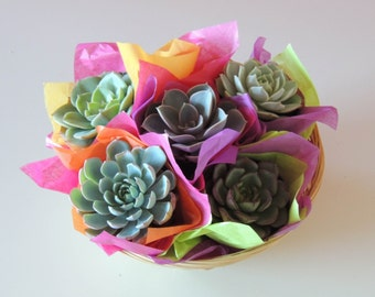 TWO-Succulent Gift Baskets