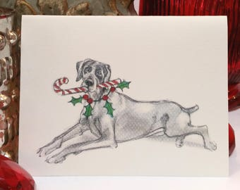 Boxed Weimaraner Holiday Cards