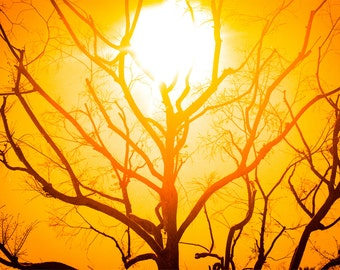The Sun Tree - Art Print
