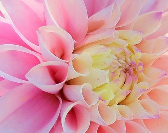 Dahlia.  A card featuring an original photograph.  Blank inside, for your own message.