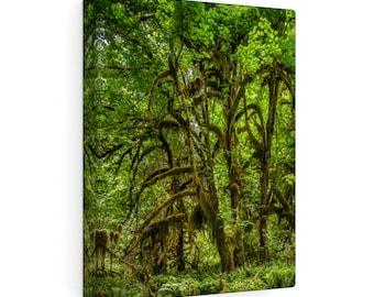 Hoh Rainforest No. 6 Canvas Gallery Wraps
