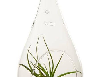 Pear Glass Terrarium  (Only)  (EA)