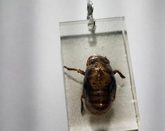 Locust Shell Resin Pendant