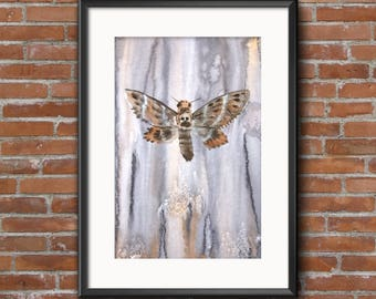 Original watercolor painting, brown and grey soft colors, scull Butterfly, moth