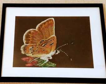 A beautiful Silver-Studded blue butterfly (female) painted with oil pastels