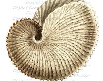Nautilus Shell - Digital Image - Vintage Art Illustration
