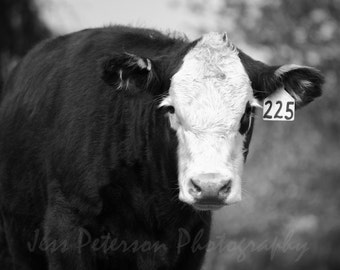 Cow photographs- Black & White Cow print. Country farm animal photography, Kitchen Nursery art. nature wall art. Rustic home Decor Cow Lover
