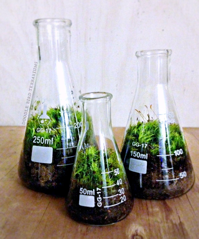 Science Beaker Terrarium Set / Industrial Decor / Flask Planters / Office Gift Set for Him