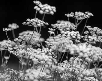 Black and White Floral Photography Canvas