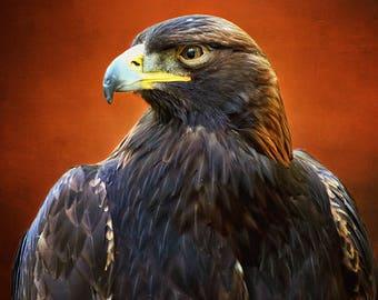Golden Eagle, Raptors, Eagle Art, Eagle Print, Raptor Print, Wildlife Art, Bird Photography, Wildlife Photography,Wildlife Prints,Bird Decor