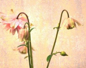 Flower photography, Pink Flowers Photo Print, Fine Art Photography, Blushing, Vintage Textured Wall Art, Floral Home Decor, Layered, Rustic