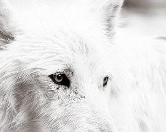Wolf Art - Wildlife Photography  - Black and White Photo -  Fine Art  Photography - Wildlife Art - Animal Photography