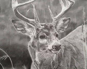 Buck Graphite Pencil Drawing