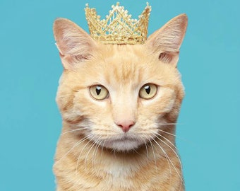 Cat Crown - Royal Crown - Game of Thrones Inspired - Dog Crown The White Queen - Princess Crown for Cat - Cat Puppy Crown - Cat King Crown