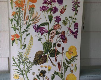 """Botanical, 9X12 original book page (Plate #11) from """"Wild Flowers of the World"""" 1970"""