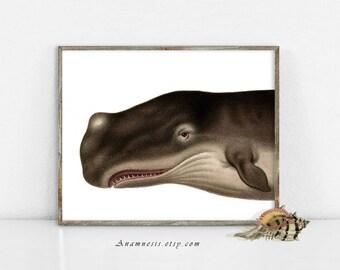 Art Print - TOOTHY baleine - Instant Download Image - océan imprimable baleine illustration pour encadrement, totes, pépinière, art maison plage des baleines
